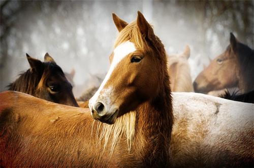 gathering mares 396