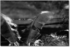 Storm (.Tatiana.) Tags: friends bw storm rain bananeira wind chuva pb vento paranapiacaba longaexposio tempestade johanes fotoclube johanesduarte siteparavendadefotos httpwwwplanobfotodesigncom tatinapb2008 fototatianasapateiro