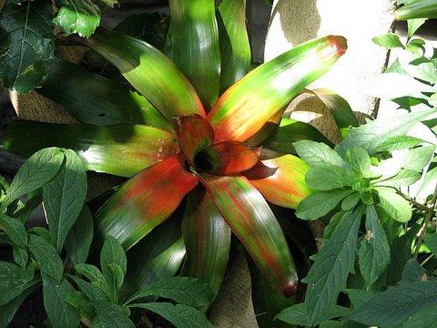 ornamental plant un id
