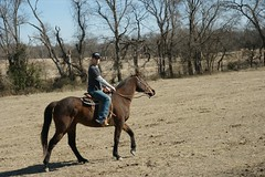IMG_2034 (weborican) Tags: horse hat day outdoor luis horsebackriding champ vanalstyne