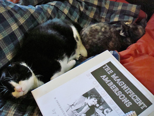 Nap with Scripts