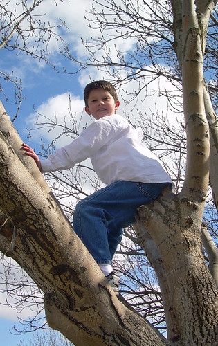 Rest stop tree climbing