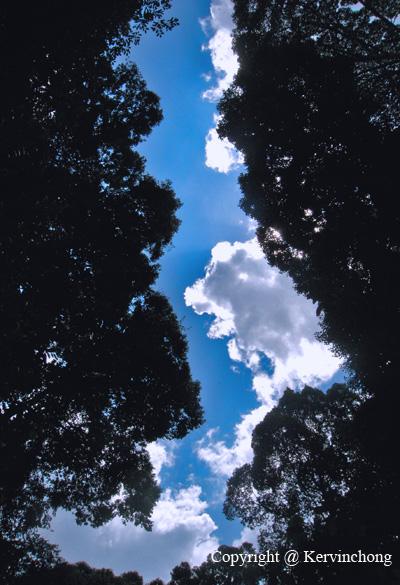 Heaven's-Pathway