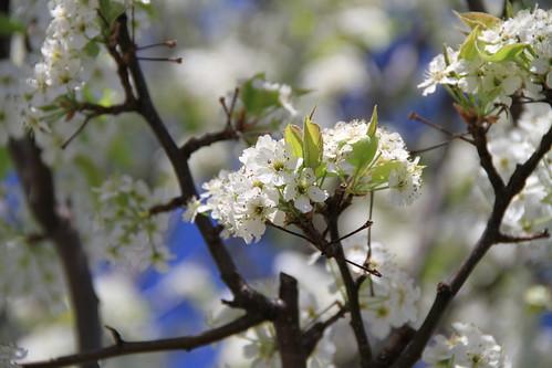 White Flower 01