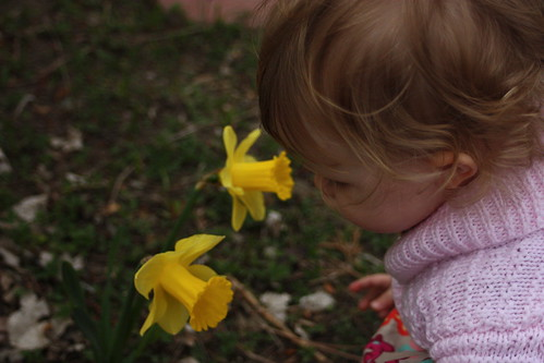 Daffodil sniffing