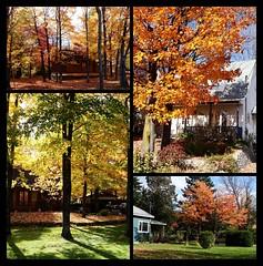 Humeurs d'automne