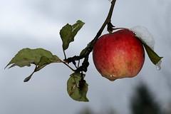 Killing time :-D (Dzwjedziak) Tags: bus apple for waiting zawoja supershot dzwjedziak theunforgettablepictures thatsclassy