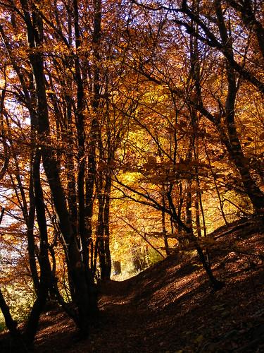 autunno sentiero nel bosco