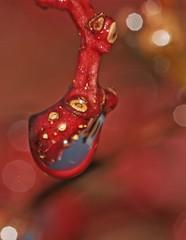 Tropfen in rot (Eulenspiegel) Tags: macro nature droplets natur waterdrops tropfen