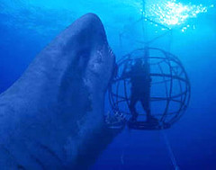 Peru - the 3rd Most Dangerous Sea of All Time - Megalodon poses with Nigel