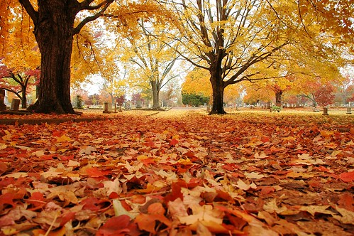 A Carpet of Autumn Color. by BamaWester style=