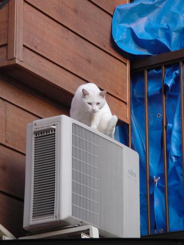 室外機の上の猫