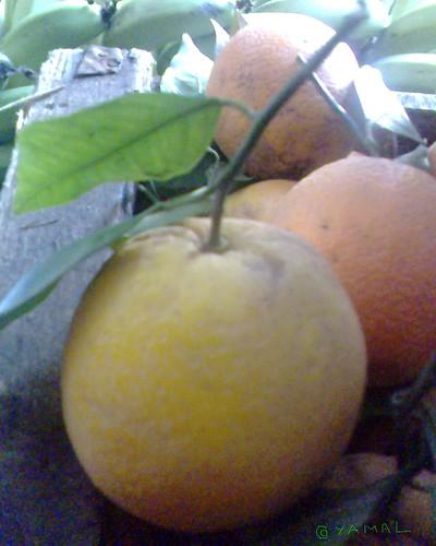 Oranges Berkane لتشين بركان