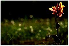 like a flower... (.Tatiana.) Tags: friends light flower luz flor super mega hiper bragançapaulista johanes fotoclube subexposta nocondodamami johanesduarte maseraassimqueeuviaela bemdiferentedoqueofotômetromandava ecomoquemmandanelasoueu achoquebobeidevez deveserexcessodetrabalho hojefoif siteparavendadefotos httpwwwplanobfotodesigncom fototatianasapateiro