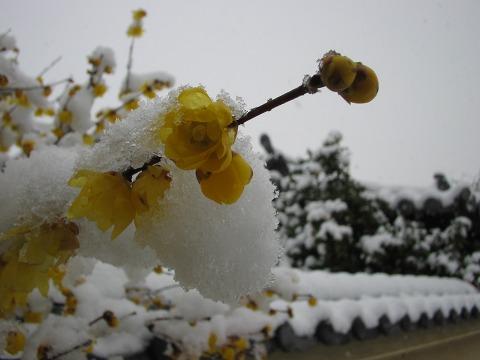当麻寺(雪景色)-12
