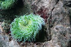 Oceanrio de Lisboa (***STE***) Tags: lisboa acquarium oceanario