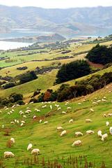 Nya Zeeland anses vara en av de mest hälsosamma platserna i världen.