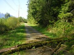 Lone blowdown Iron Horse trail just east of Cedar Butte trail junction. (bikejr) Tags: ironhorse johnwayne