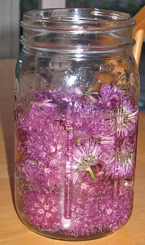 Chive flowers in white wine vinegar