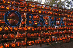 Obama wall (Doxieone) Tags: orange fall halloween wall pumpkin carved elizabeth charlotte president pumpkins northcarolina carolina 2008 democrats obama pumpkinwallset2008 halloweenfall2008set