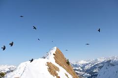 Freedom to explore. Rochers de Naye, Switzerland (luana.ontheroad) Tags: montagne montreux mountains rochersdenaye vaud switzerland snow winter birds flying freedom sky