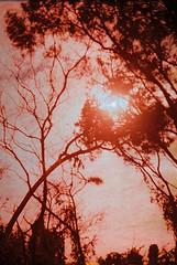 F1030016_lr (chi.ilpleut) Tags: 樹的姿態 樹 kinmen taiwan island quemoy 2017 chinesenewyear lunar film expiredfilm kodakelitechrome100 iso100 crossprocessing 135mm 35mm analogue ilovefilms kodakfilm 底片 過期底片 柯達 記憶 蹤跡 金門鎏金之島kinmen 台灣 海島 島嶼 外島 回憶 走春 大晴天拍照天 晃晃 隨拍 我不在,就在去海邊的路上 海景 outing 冬陽 暖暖 暖陽 思念 漫步