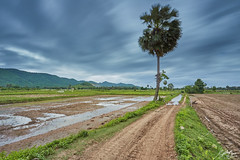 Scene in Kampot province (Sotitia Om Photography) Tags: southeastasia kampot cambodia province countryside landscape ricefield palmtree mountain asia kampuchea asian cambodianphotographers sotitiaomphotography canon canonasia canoncambodia canon1740mm canon6d wideanglelens