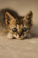 Litel cat (avibenzaken) Tags: cat kitten sweet katze cateyes   ktzchen  littel