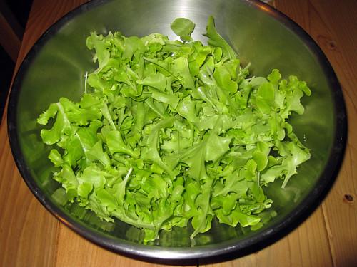 Lettuce from our garden