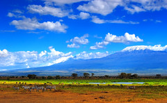 The Wild (| HD |) Tags: africa wild mountain 20d kilimanjaro nature animal canon landscape mt kenya wildlife safari zebra hd darwish hamad amboseli wwwhamaddarwishcom