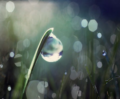 twilight (Lani Barbitta) Tags: nature wet water nikon drop dew droplet 28 lani 60mm28 d40 mostinterestingaccordingtoflickr nikond40 dewdropart magicaloratleastithinkso lanibarbitta barbitta