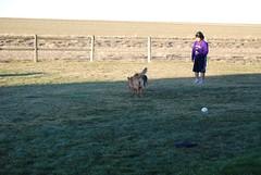DSC_0065 (WyoLibrarian) Tags: dog colorado mead bcd greatdanes bonecancerdogs