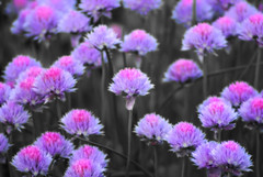 Dancing in Purple & Pink