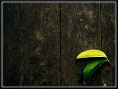 .Signature. (.krish.Tipirneni.) Tags: life green art sign yellow leaf signature deck cracks rknature