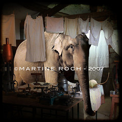 my beautiful laundrette (Martine Roch) Tags: elephant animal collage mouse antique surreal mice laundry photomontage manray 500x500 miseenscne ttv petitechose martineroch artlibre theexhibit masterpiecesoflightdark