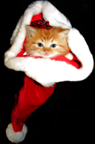 Meowie Christmas to you all