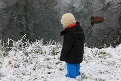 2007_12_20DSC_9812_d01 (iVOMiMiBoRE) Tags: trees winter snow holland tree netherlands nijmegen frost nederland frostedtrees winterinholland frozentrees malvert winterinthenetherlands
