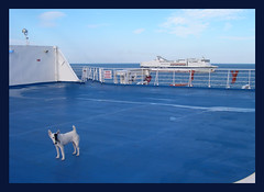 mi hanno fatto un occhio nero (roberta o) Tags: cane mare blu ponte nave azzurro nero occhio sfide photoamatori occhionero