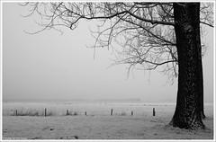 In a colorless world | In een kleurloze wereld (Dit is Suzanne) Tags: 21122007 nederland netherlands нидерланды groningen гронинген vinkhuizen aquamarijnpad ©ditissuzanne canoneos40d sigma18125mm13556 img1432 winter зима mist fog туман zwartwit blackandwhite чернобелый 123nl views1200