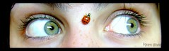 To the right (Honey Pie!) Tags: verde green eyes moments olhos ladybird ladybug soe joaninha blueribbonwinner platinumphoto flickrplatinum ojoshermosos betterthangood cybershotdscs650