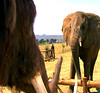 43 Martha and the elephant matriarch low-res