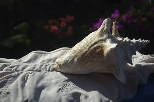 Conch Shell Shirt Dryer