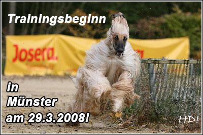 Windhund Training WRV-Münster