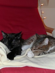 (mikelemmon) Tags: cats helix asleep ursa