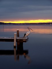 Bert, a sunset, a reflection and a pier, what more do you want? (pominoz) Tags: sunset lake reflection bird newcastle pier big grandmother bert pelican nsw thumbsup reflexions momma lakemacquarie twothumbsup bigmomma belmontsouth natureandnothingelse thumbsupwrestling tuw073