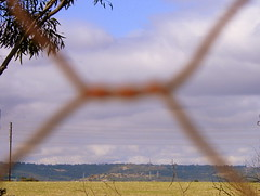 Through rusted wire