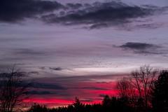 Sunset 16 (robinlamb1) Tags: sunset sundown dusk redsky outdoor clouds darkskies trees silouettes birds nature landscape aldergrove bc