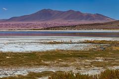 Salty marsh. (david takes photos) Tags: losflamencosnationalreserve reservanacionallosflamencos salardetara tara atacama chile sanpedrodeatacama regióndeantofagasta x