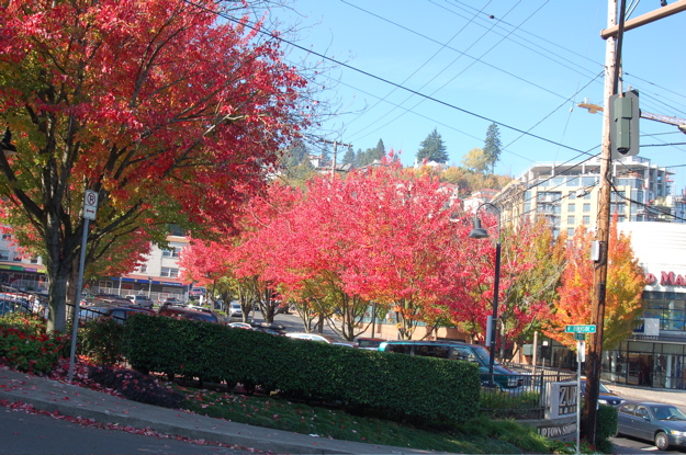 corner_23rd_burnside_red_trees3a