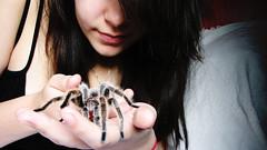 my precious. (4/365) (a. stump) Tags: pet girl smile spider affection longhair tarantula stump 365 smirk chileanrosehair astump amandastump